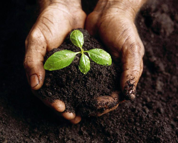 Compost – 5 steps to turn your organic waste into fertile soil
